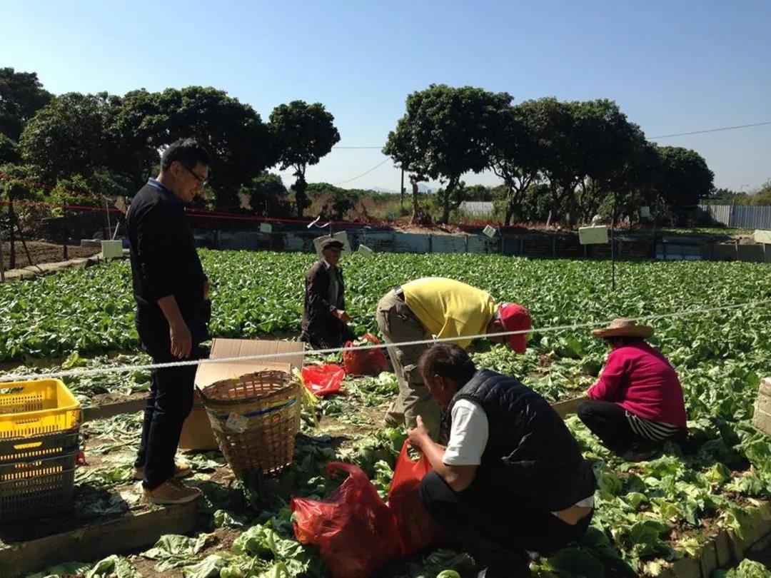 来自灵魂深处的发问,香港有农民吗?