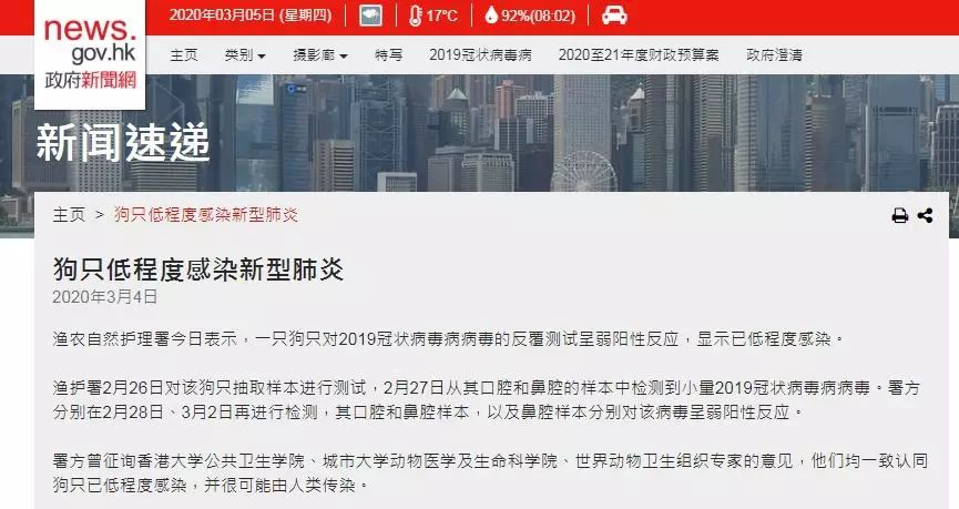 全球首例!香港确诊宠物狗感染新冠病毒,会传染给人吗?